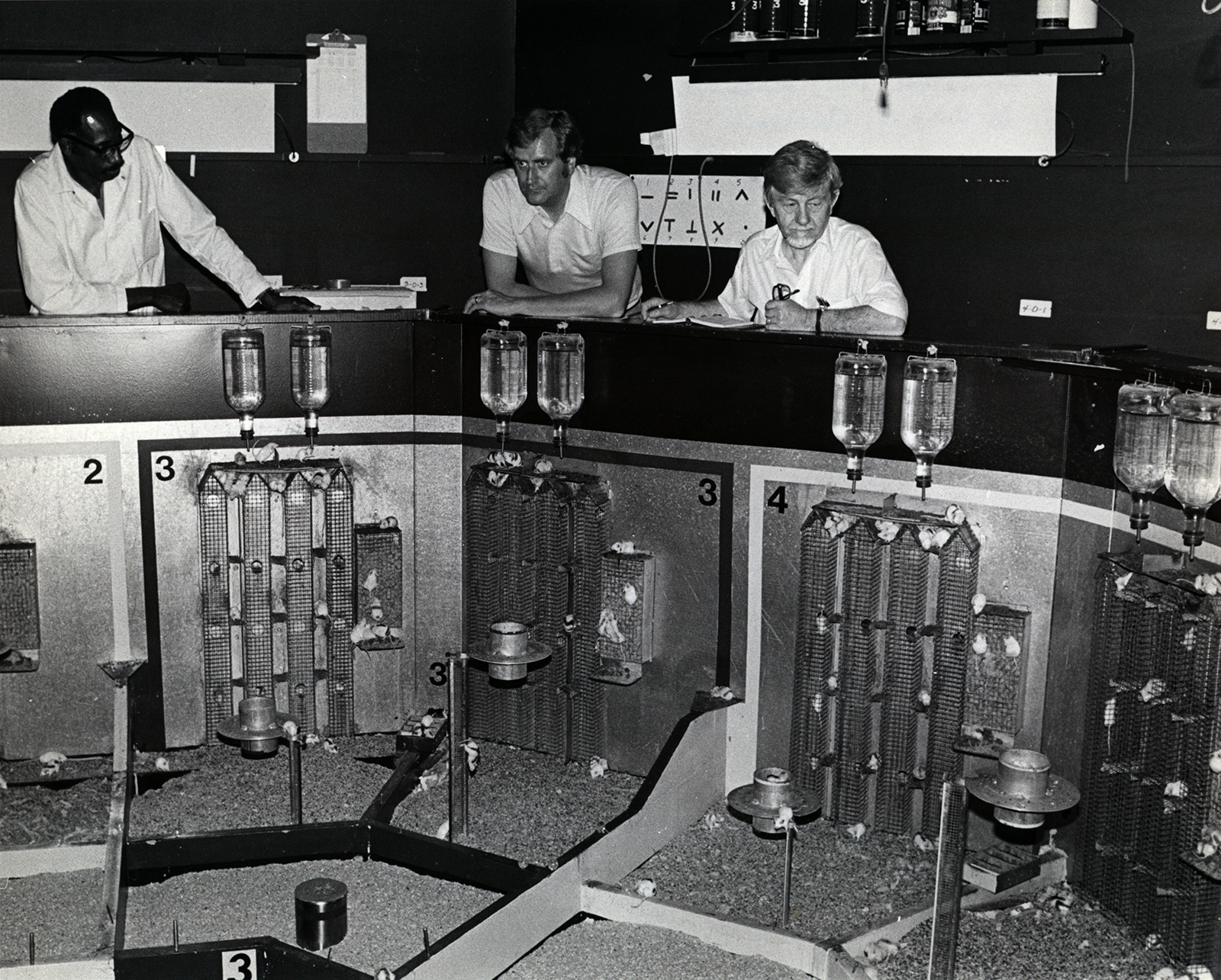 eksperyment calhouna